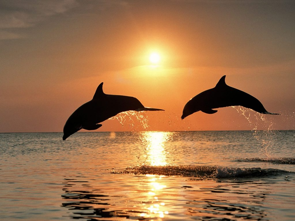 dolphin-spotting-villas-sardinia-italy